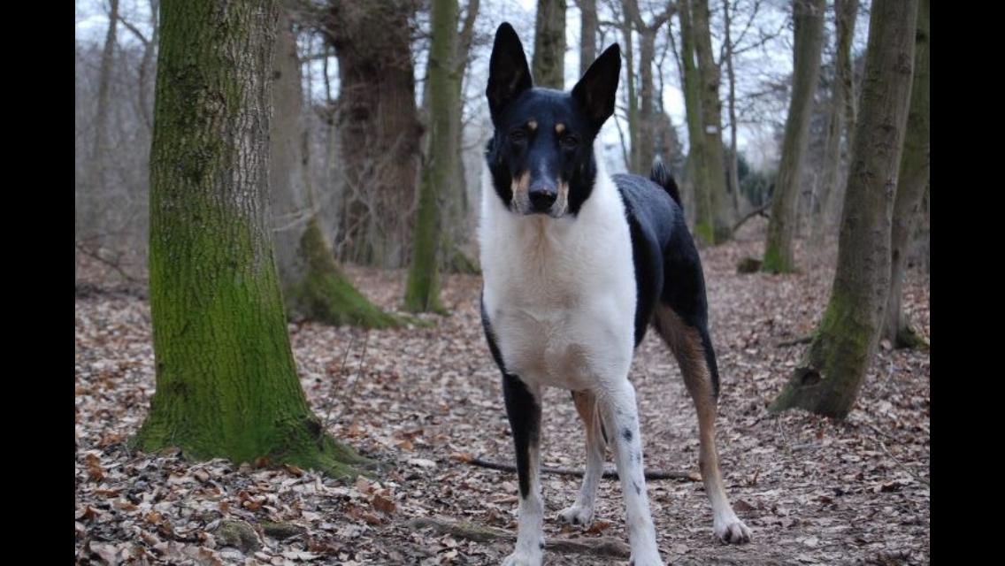 Diego beim Spaziergang im Wald