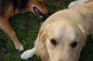 Hundetrainerausbildung_BHV_klein