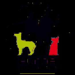 Hundetrainer werden