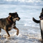 Hundestrand - Nanuk und Diego